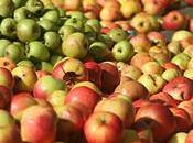 Défendre biodiversité (re)découvrir pommes grands-pères