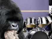 [Marketing/Pub] Gare gorille
