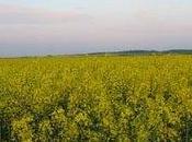 L'eau Etats-Unis sous pression biocarburants