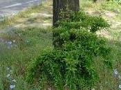 d'Aubervilliers, l'herbe pousse librement...