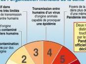 Grippe pandémie déclarée, quelques conseils