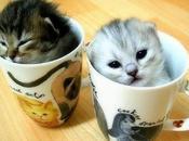 Quand bébés animaux s'invitent dans mugs
