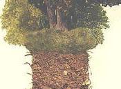suis l'arbre cache forêt Alice Poncheville