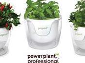existe plantes sans terre