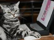 homme accuse chat d'avoir téléchargé images pornos
