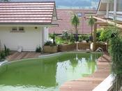 Vidéo piscine naturelle