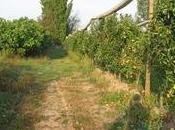 ProNatura Provence visite amicale production