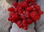 Salade framboises betteraves