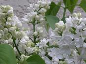 Étranges fleurs (Maurice Carême)