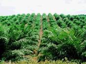 L'huile palme désastre écologique