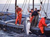 L'UE décidera l'automne s'il faut renoncer commercialiser thon rouge
