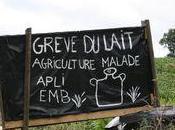 L'APLI déclare grève lait