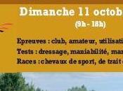 Concours d'attelage Vendée