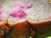 Banana cake moelleux ricotta fraises marinées