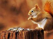 Détrompez-vous, écureuil, n'est gentil mignon....