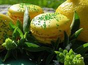 Macaron citron-basilic