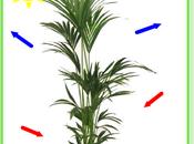 Dépollution l'air intérieur plantes