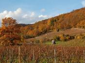 Riesling, hommes Grands Crus d'Alsace