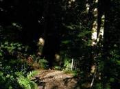 forêt Bellouve