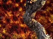sorcière noire dans flammes...