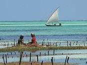 Zanzibar hiver... parenthèse doucement épicée