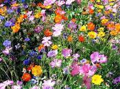 pauvres fleurs (Fernando Pessoa)