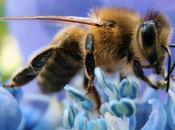 Gentille abeille (Louis Guillaume)