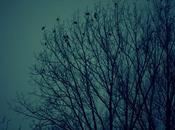 courage oiseaux