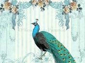 belles plumes Paon