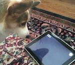 Rendez votre chien heureux, achetez d'iPad