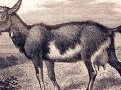 jeune homme chèvre