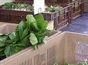 légumes enfin
