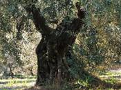crème Nature L'Occitane Provence: j'adore