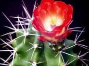 Cactus fait marin...