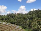L'Indonésie institue moratoire déforestations