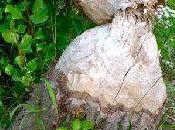 toue sèche milieu humide