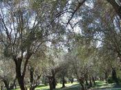 Apéro sous oliviers