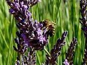Partageons jardins avec abeilles...