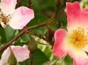 fleurs Bach: positivez émotions