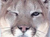 God!!! Puma