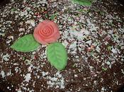 gâteau cacao aromatisé fraise-crème
