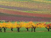 Lumière couleurs d'automne