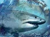 requin, poisson cétacé tout écosystème présenté documentaire