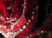 Vinaigre Roses