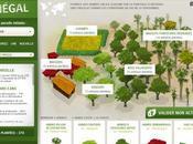 Reforestation Planter arbre l'offrir pour lutter contre déforestation