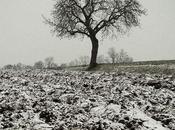 Morne hiver
