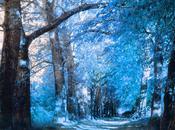 Photo avec effet infrarouge