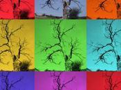 Photo dimanche arbre mort