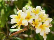 comme... Fleur