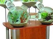 Design d'aquariums
